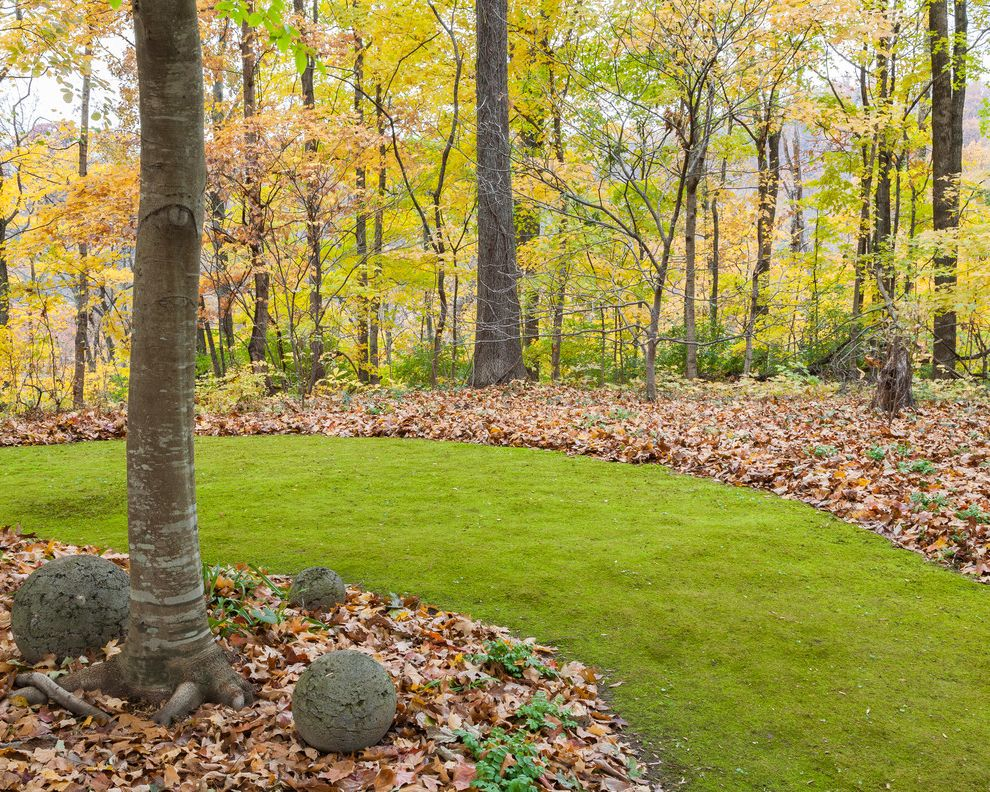 Moss and Associates with Traditional Landscape Also Fall Foliage Lawn Alternative Moss Moss Lawn Native Plants Shade Gardening Shade Plants