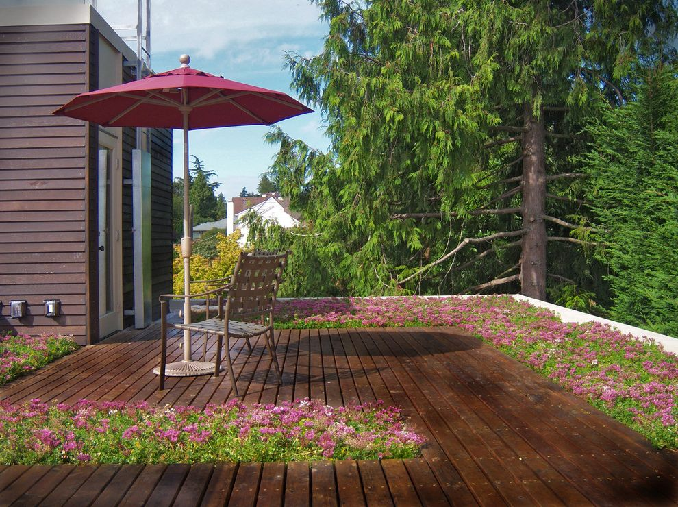 Parts of a Roof   Contemporary Deck  and Deck Green Roof Living Roof Patio Furniture Patio Umbrella Roof Deck Sedums Sustainable Terrace Wood Flooring Wood Siding