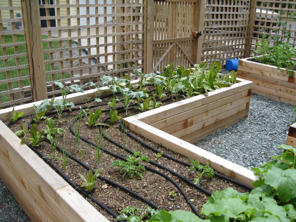 Pest Control Lafayette La   Traditional Landscape  and Drip Lines Edible Gardens Gravel Lattice Raised Beds Trellis Vegetable Gardens Wood Fence