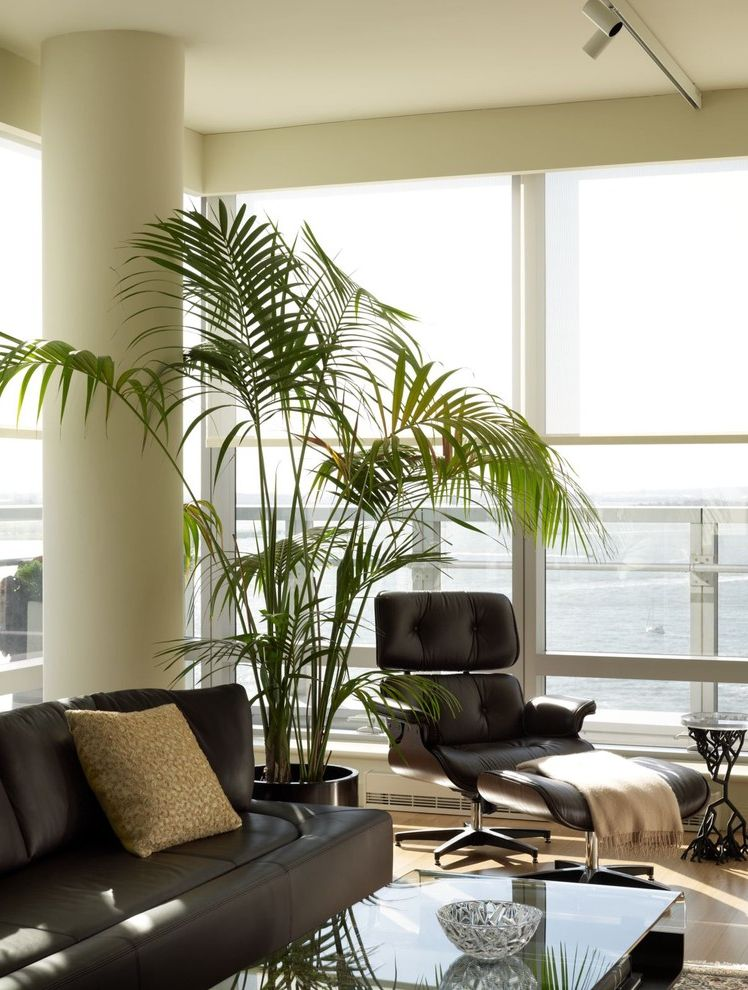 Plants for All Seasons   Contemporary Living Room Also Columns Container Plants Corner Windows Glass Coffee Table Glass Wall House Plants Leather Armchair Leather Sofa Modern Icons Potted Plants Window Sheers Window Treatments