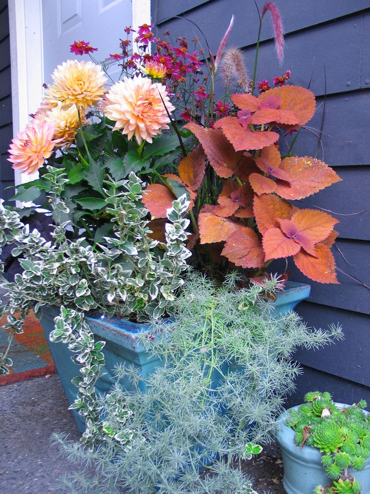 Plants for All Seasons   Traditional Landscape  and Container Plants Dahlias Entrance Entry Floral Arrangement Orange Flowers Potted Plants Succulents Wood Siding