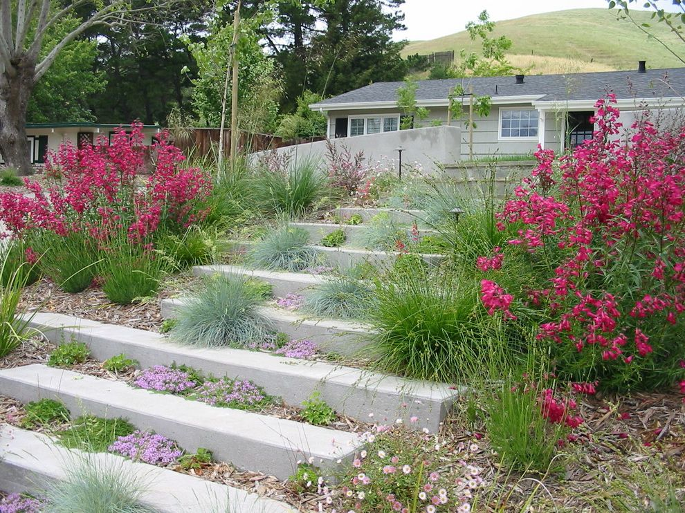 Plants for All Seasons with Contemporary Landscape Also Concrete Paving Entrance Entry Groundcovers Hillside Mulch Path Pink Flowers Slope Staircase Stairs Steps Walkway