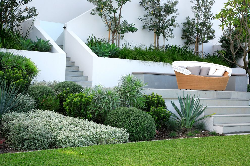 Plants for All Seasons with Modern Landscape Also Agave Grass Hillside Lawn Mass Plantings Outdoor Cushions Patio Furniture Planters Retaining Wall Slope Staircase Stairs Steps Terrace Turf