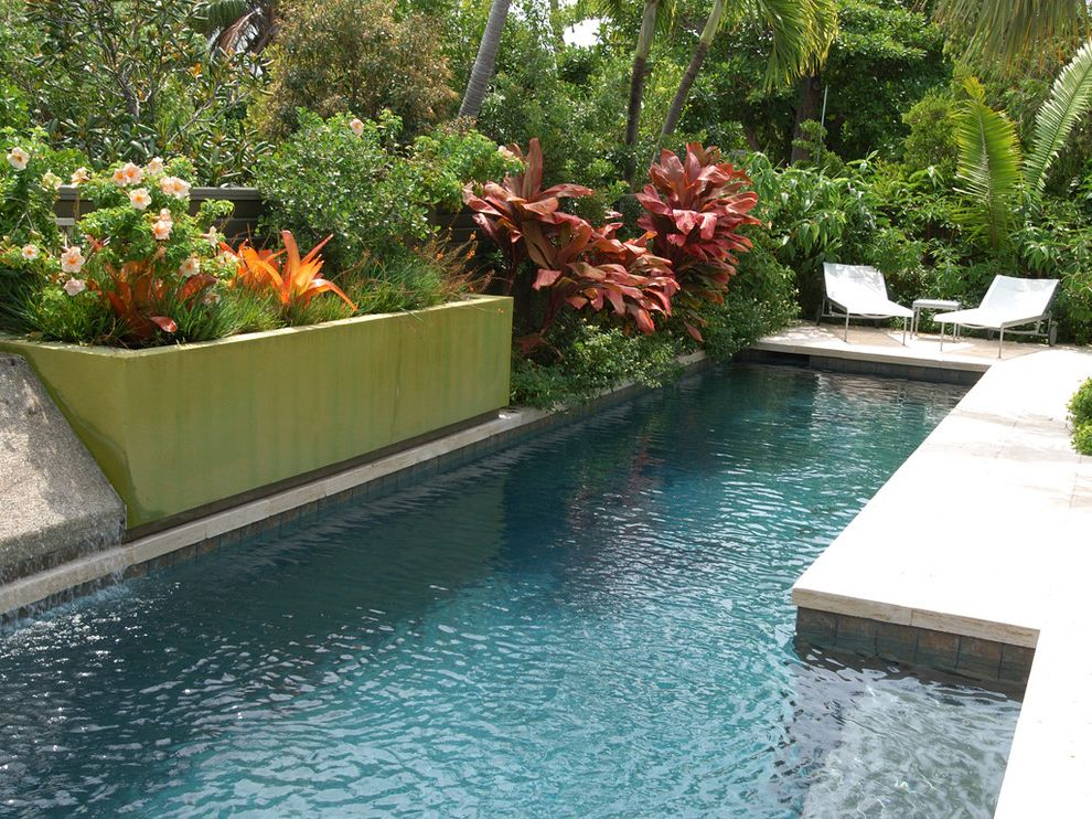 Pools in Staten Island   Contemporary Pool Also Built in Green Planter Flowers Green Outdoor Planter Outdoor Chaise Lounge Palm Tree Pool Pool Step Stone Patio Tropical Plants Water Feature Water Fountain