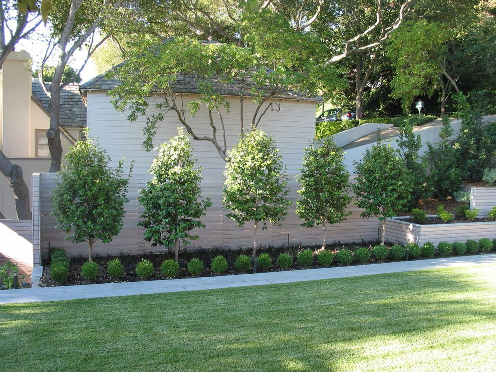 Privacy Fence Trees   Contemporary Landscape Also Boundry Wall Geometric Geometry Grass Lawn Path Planter Plat Fence Raised Bed Raised Planter Turf Walkway Wooden Fencing