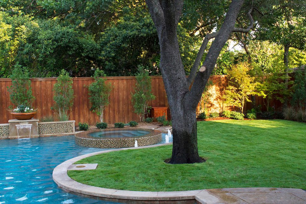 Privacy Fence Trees   Contemporary Pool Also Backyard Curved Pool Grass Jacuzzi Modern Mosaic Tile Plant Pot Planting Bed Pool Redwood Spa Wood Fence