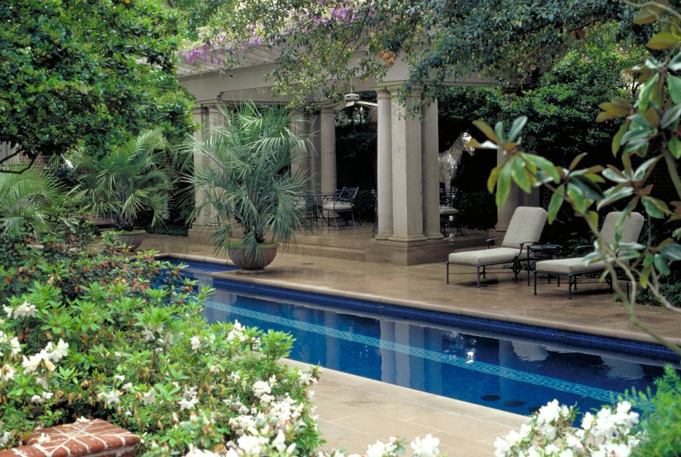 Public Pools in Tampa with Traditional Landscape  and Cabana Chaise Lounge Outdoor Cushions Container Plants Lap Pool Mosaic Tiles Palm Treed Patio Furniture Pool Pool Tiles Potted Plants Stone Paving