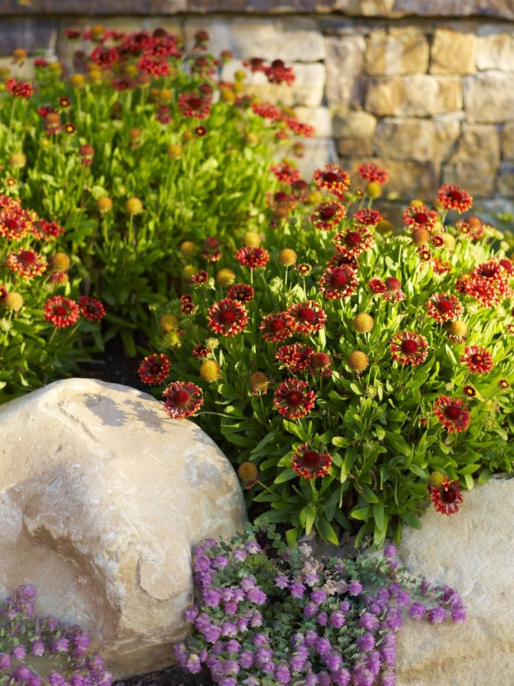 Purple Flowers Names with Mediterranean Landscape Also Boulder California Garden Groundcover Low Maintenance Low Water Mediterranean Natives Natural Outdoor Living Perennial Regional Rock Stone Wall