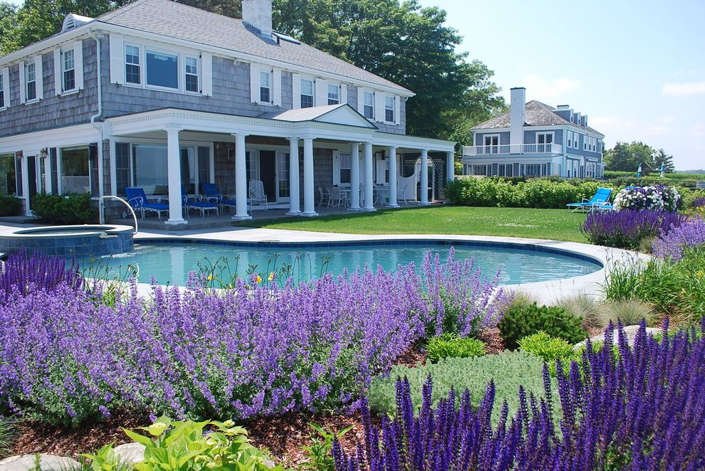 Purple Flowers Names with Traditional Landscape  and Cape Cod Style Covered Porch Garden Grass Grasses Lawn Mass Plantings Pool Purple Flowers Shingle Siding Suculum Turf Window Shutters