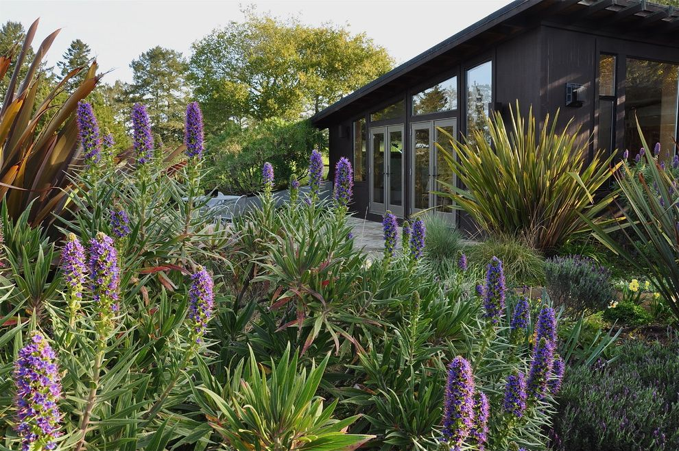 Purple Flowers Names with Traditional Landscape  and French Doors Mass Plantings New Zealand Flax Patio Pride of Madeira Roof Line Shed Roof Wood Siding