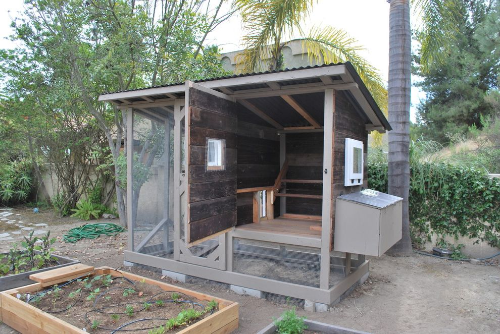 Regal Chula Vista   Traditional Landscape  and Chicken Coop Chula Vista Chula Vista Chicken Coop Compost Gardening Organic Reclaimed Wood Reclaimed Wood Chicken Coop San Diego San Diego Chicken Coop San Diego Chicken Laws Sustainable