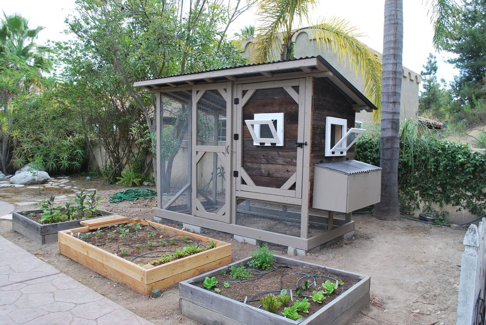 Regal Chula Vista with Traditional Landscape Also Chicken Coop Chula Vista Chula Vista Chicken Coop Compost Gardening Organic Reclaimed Wood Reclaimed Wood Chicken Coop San Diego San Diego Chicken Coop San Diego Chicken Laws Sustainable