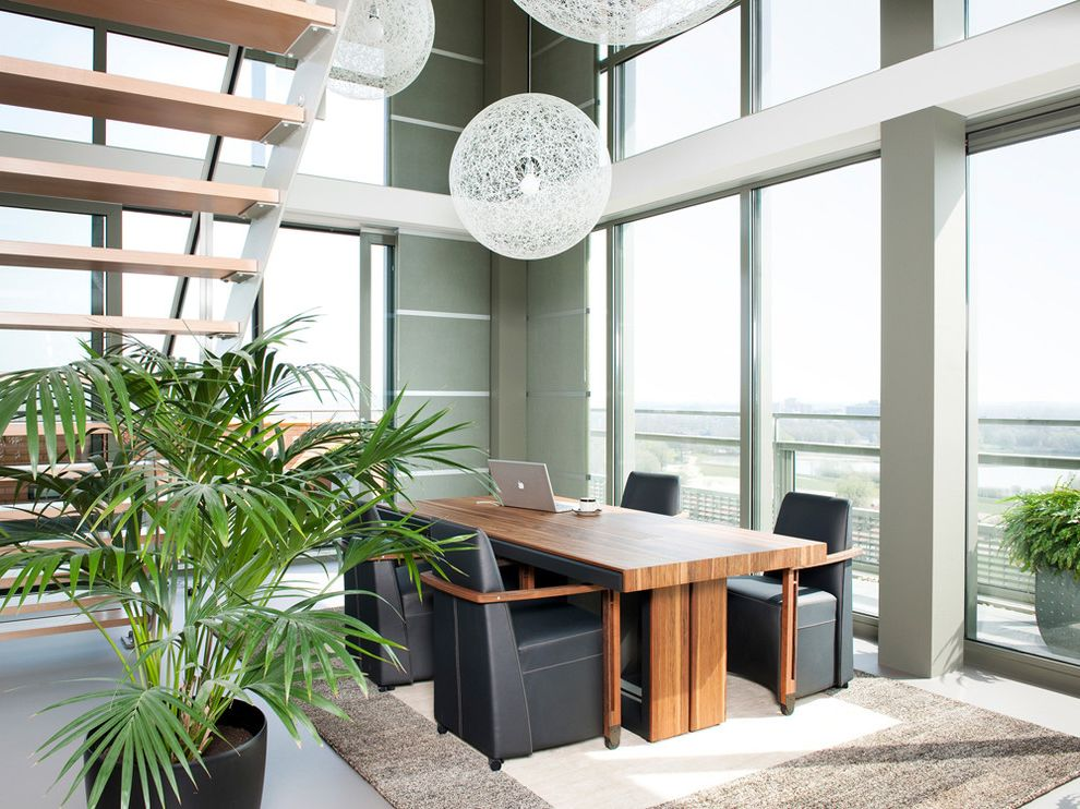 Sago Palm Care   Modern Dining Room Also Area Rug Clerestory Freestanding Staircase House Plants Minimal Neutral Colors Open Risers Pendant Lighting Trestle Table Upholstered Dining Chairs