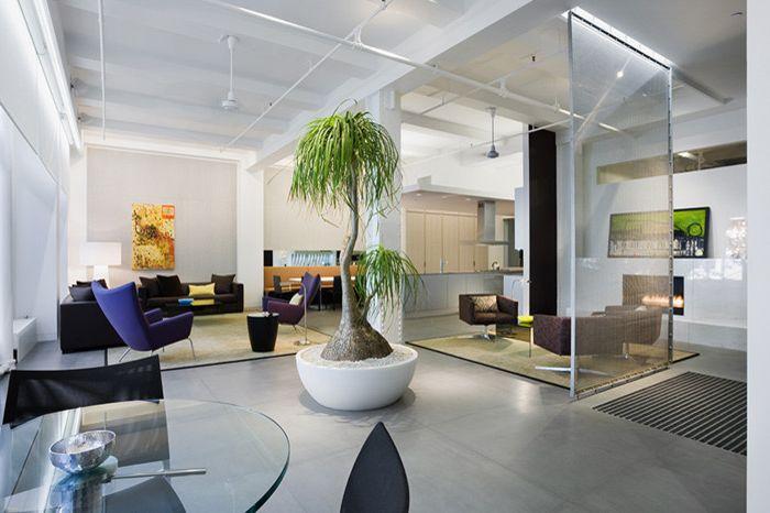 Sago Palm Care   Modern Living Room  and Modern