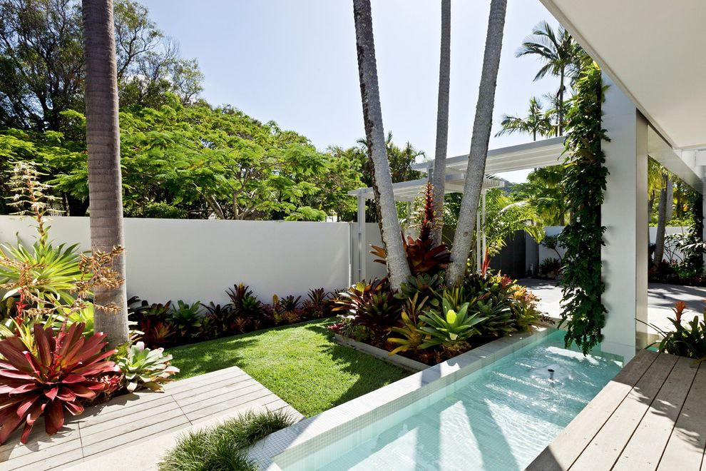 Sago Palm Care   Tropical Pool Also Breezeway Deck Eave Light Pool Modern Overhang Softening the House and Giving the Garde Succulents the Existing Palms Play Strong Roles Wit Tile Surround Tropical Vine White House White Wall