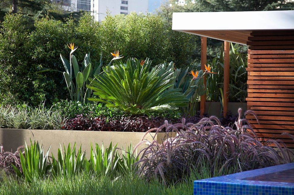 Sago Palm Care with Contemporary Landscape Also Blue Mosaic Tile Flowers Garden Grass Mixed Plants Retaining Wall Shrubs Wood Slats