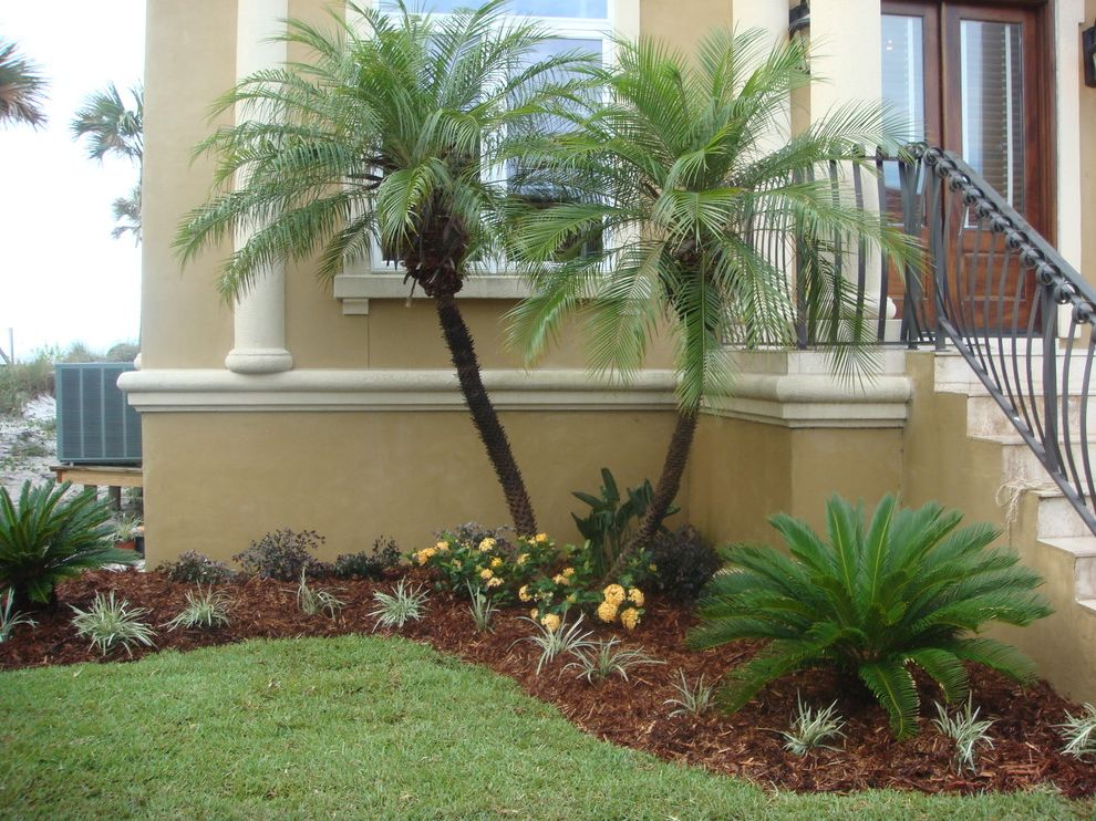 Sago Palm Care with Tropical Landscape  and Tropical