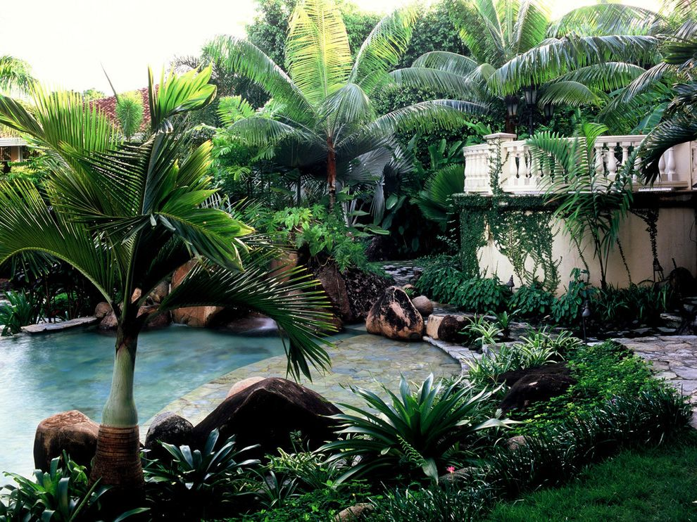Sago Palm Care with Tropical Pool Also Backyard Balustrades Boulders Lush Overgrown Palm Tree Plantings Poolside Privacy Rocks Swim Step Tropical