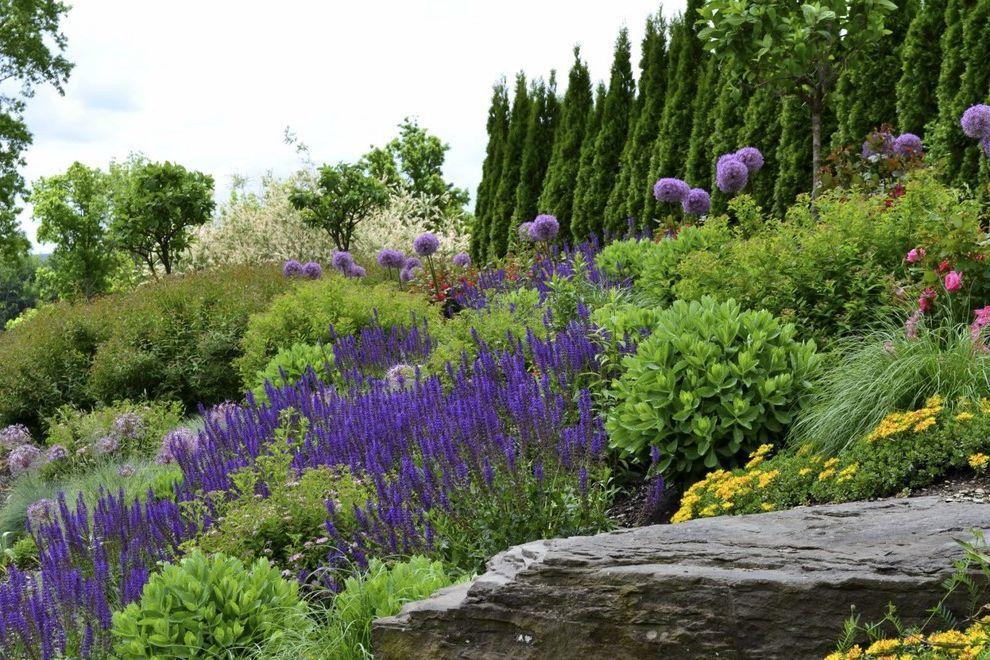 Seattle Plant Nursery   Contemporary Landscape Also Boulders Bushes Hill Landscape Hilltop Landscape Pink Flowers Purple Flowers Rocks Shrubs Tall Trees Yellow Flowers