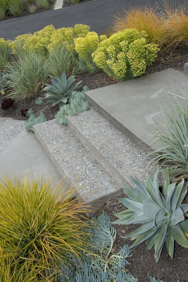 Smith Brothers Landscaping   Midcentury Landscape Also Agave Anemanthele California Concrete Drought Tolerant Euphorbia Exposed Aggregate Ipe Leymus Natives Path Stair Step Walkway
