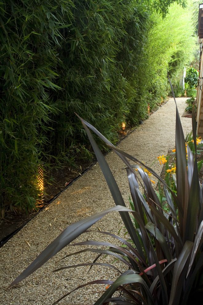Sod for Shade with Contemporary Landscape  and Bamboo Gravel Outdoor Lighting Path Planter Side Yard Walkway Wall
