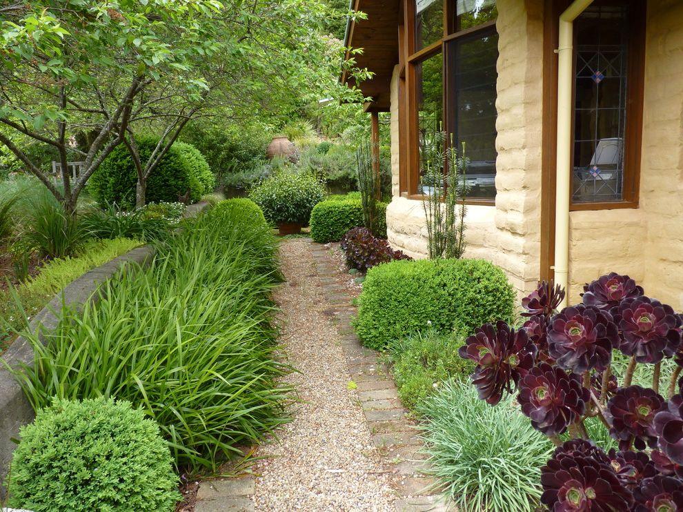 Southeastern Salvage Chattanooga   Eclectic Landscape Also Aeonium Dianella