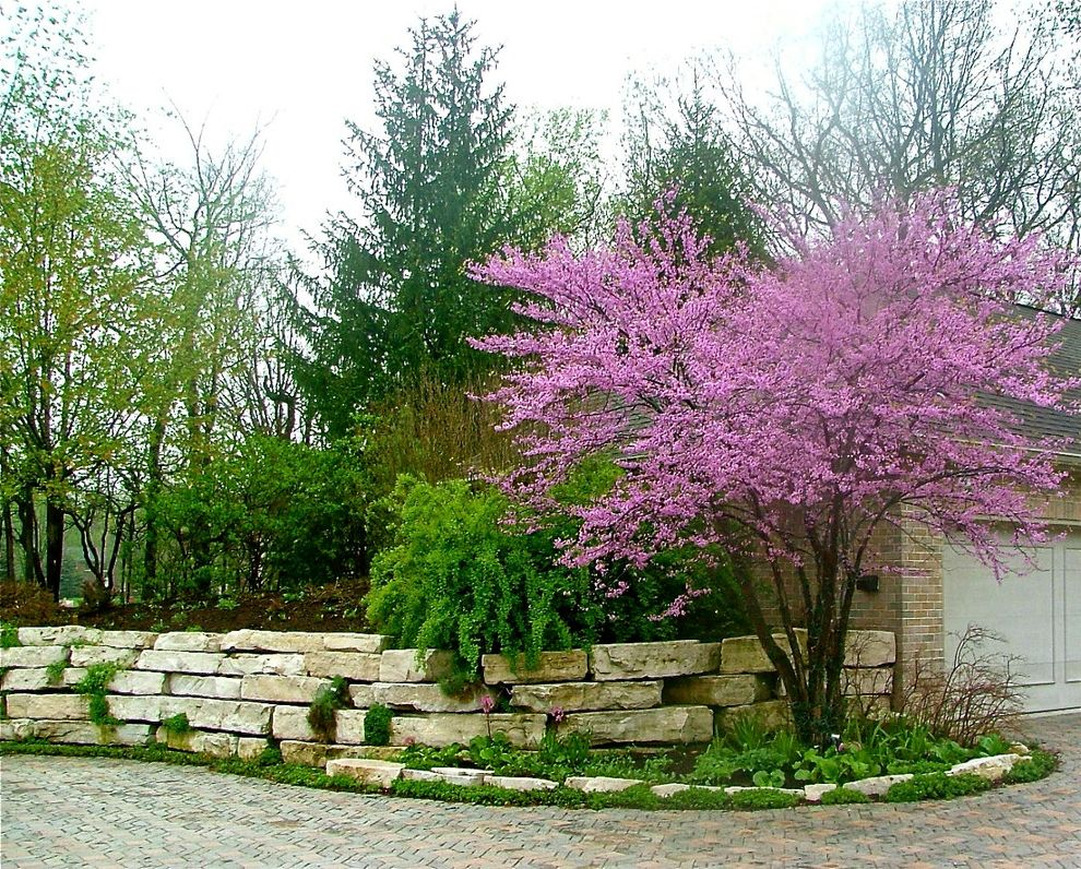Sullivan Tree Service   Traditional Landscape  and April Flower Ground Cover Landscape Midwest Spring Stone Wall Tree