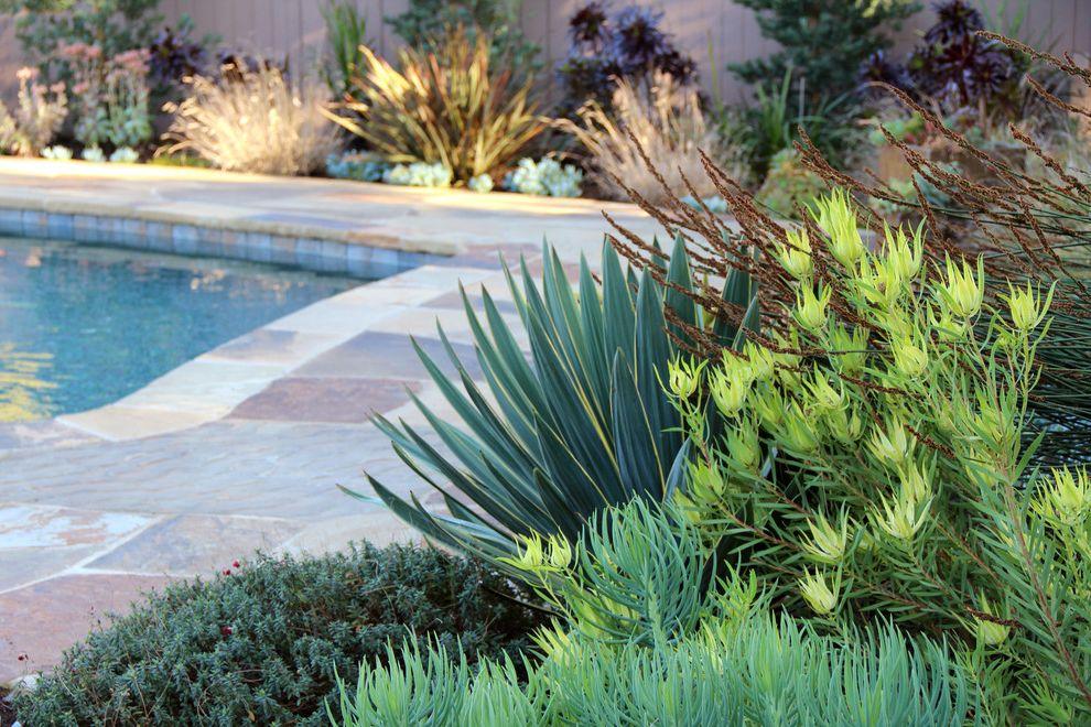 Texas Climate Zones   Contemporary Landscape Also Drought Tolerant Dry Garden Flagstone Meadow Ornamental Grass Palos Verdes Plants Pool Stone Stone Path Stone Patio Succulents