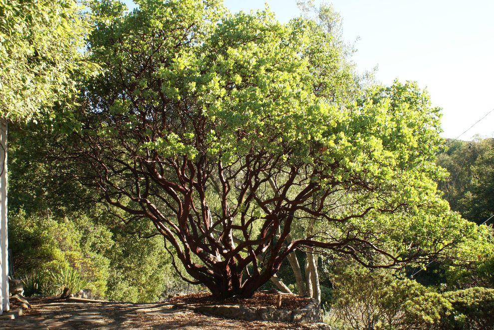 Texas Climate Zones    Landscape  and Arctostaphylos Manzanita Dr Hurd California Native Plants Dr Hurd Manzanita Dr Hurd Manzanita Native California Plants