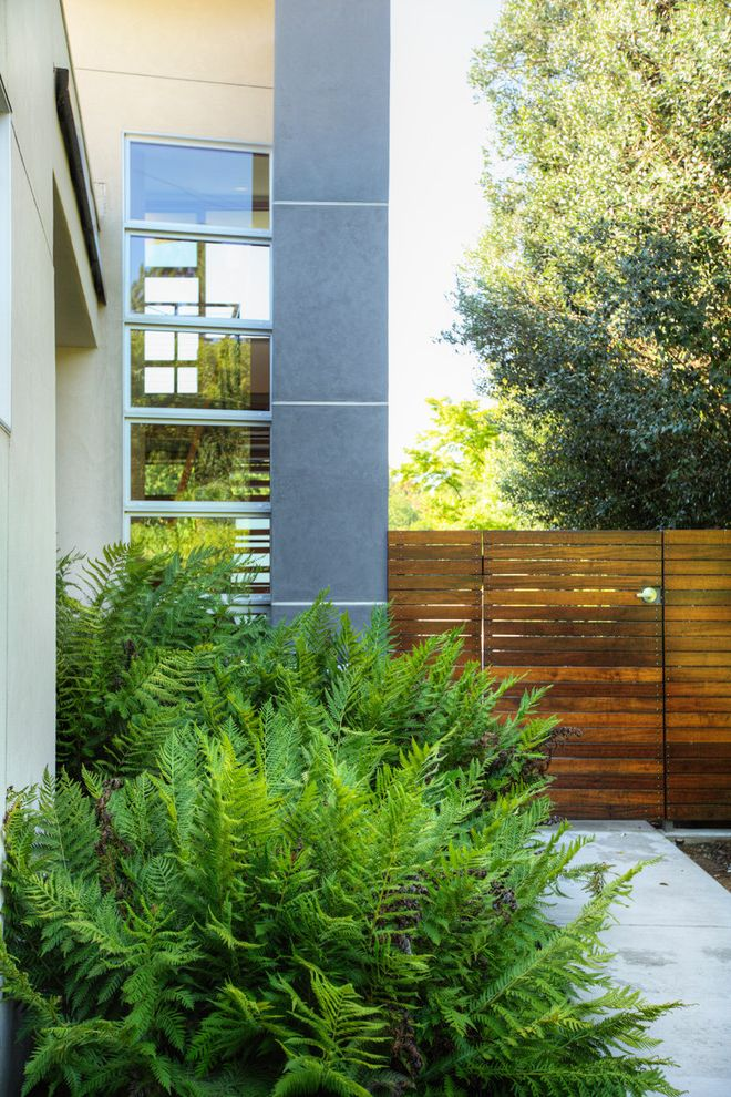 Texas Climate Zones   Modern Landscape Also Concrete Ferns Garden Gate Gate Side Yard Stucco Tile Window