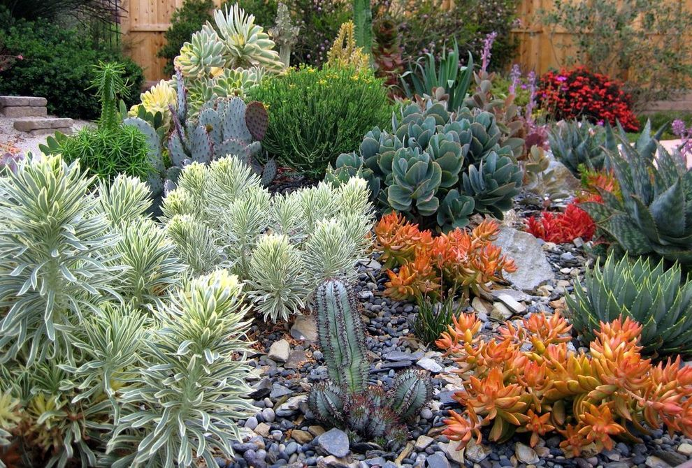 Texas Climate Zones with Contemporary Landscape  and Aeonium Cacti Cactus Colorful Foliage Drought Tolerant Euphorbia Gravel Orange Plants Rock Garden Succulents
