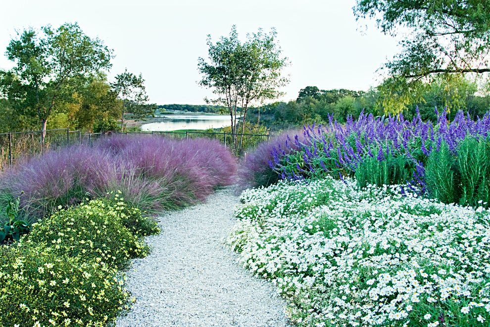 Texas Sage Shrub with Rustic Landscape  and Dallas Landscape Flowering Plants Garden Gravel Pathway Gravel Walkway Lakeside Landscape Landscape Design Landscaping Lavender Metal Fence Native Landscape Natural Landscape Rustic Landscape Water View
