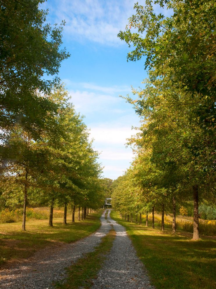 Types of Gravel with Modern Landscape  and Alle Double Row of Trees Gravel Driveway Ribbon Driveway