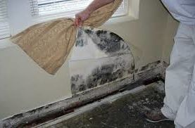 Virginia Beach Permits and Inspections with  Spaces  and Virginia Beach Mold Inspection Virginia Beach Mold Testing