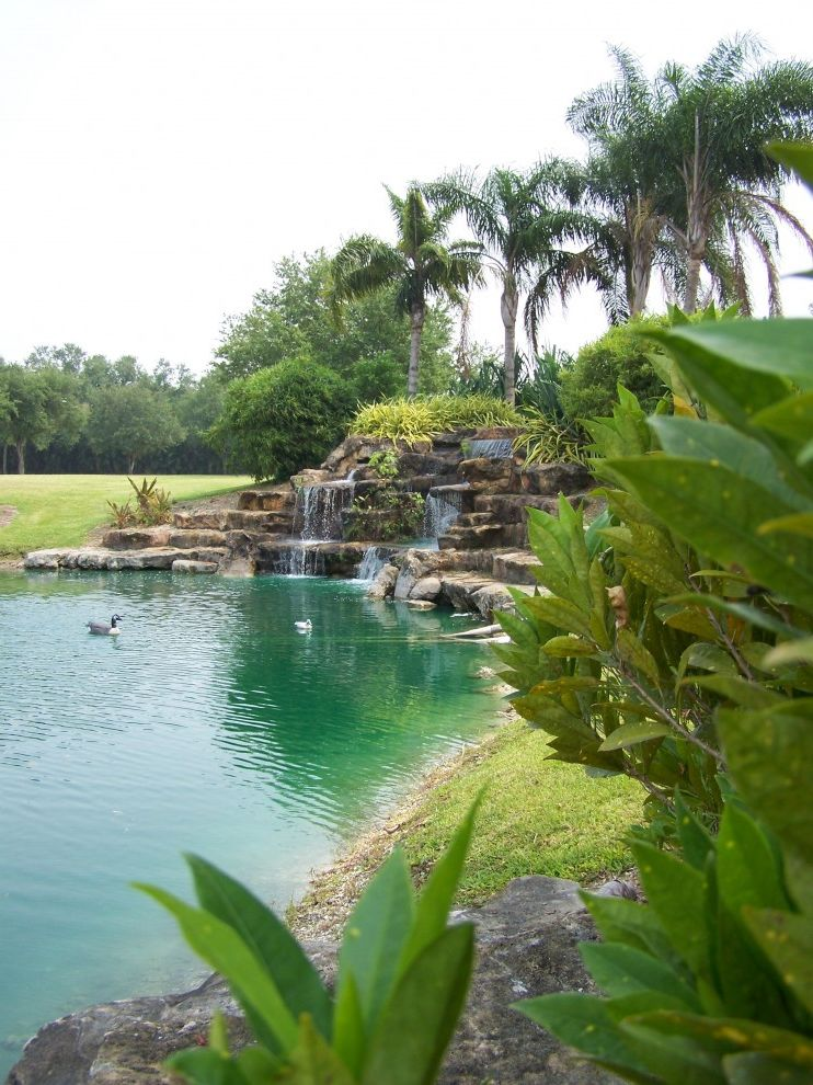 Waterfalls in Florida   Tropical Landscape  and Boulder Grass Lawn Palm Tree Pond Rock Stone Terrace Turf Water Feature Waterfall