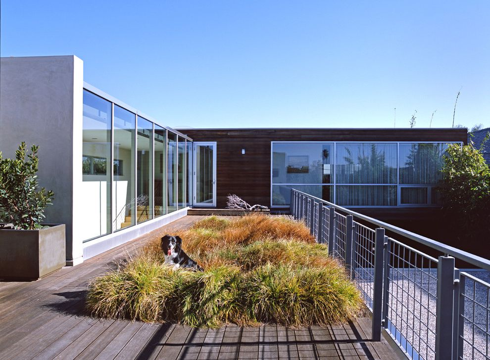 Weld Wire Fence with Modern Deck Also Container Plants Deck Flat Roof Glass Wall Grasses Mesh Metal Railing Potted Plants Roof Line Roof Terrace Wood Siding