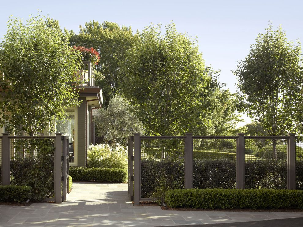 Weld Wire Fence with Traditional Landscape  and Gray Fence Hedges Lavender Manicured Garden Secluded Garden