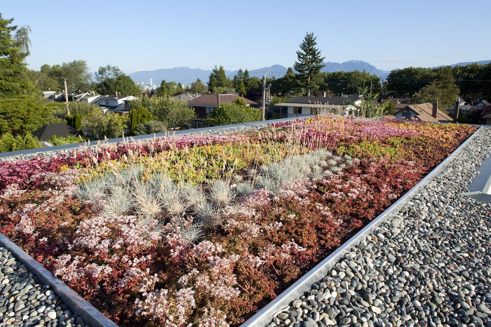 What Does Chagrin Mean   Contemporary Landscape  and Geometric Geometry Green Roof Living Roof Pebbles Roof Garden Stormwater Management Succulents Sustainable View