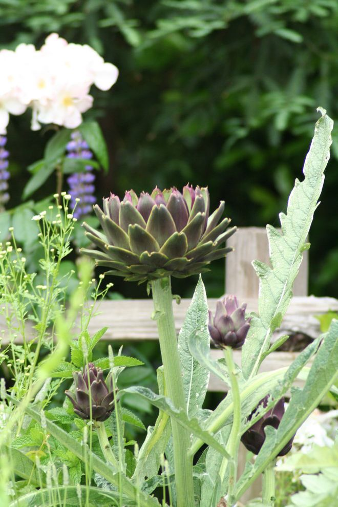 What is Square Foot Gardening with Eclectic Landscape and Artichoke