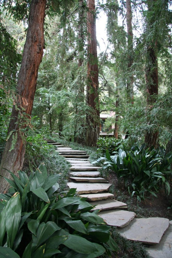 Where to Buy Stepping Stones   Contemporary Landscape Also Ferns Forest Hillside Path Pavers Redwood Trees Steps Trail Walkway