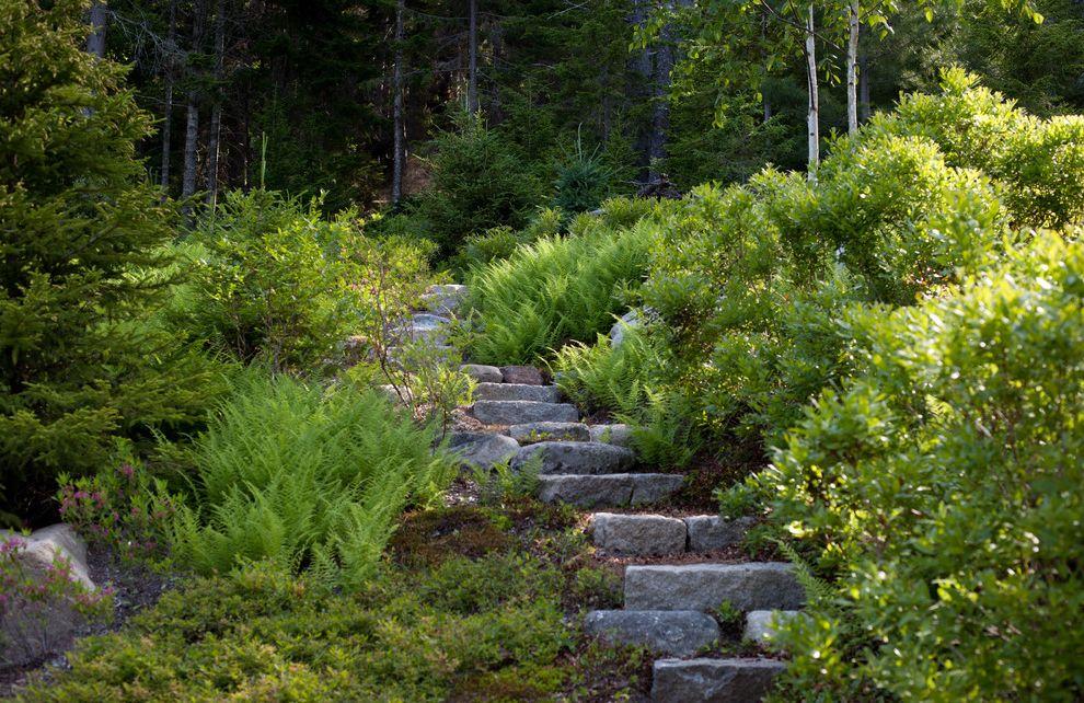 Woodland Park Lodges with Rustic Landscape  and Ferns Hillside Mass Plantings Outdoor Staircase Slope Slope Stability Stone Staircase Woodland Garden