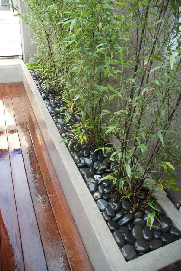 Bamboo Growth Rate    Landscape Also Bamboo Concrete Planter Contemporary Design Deck Landscape Design Modern Landscape Design Modern Patio Modern Planting Patio Planter Polished Rock River Rock Wood Deck