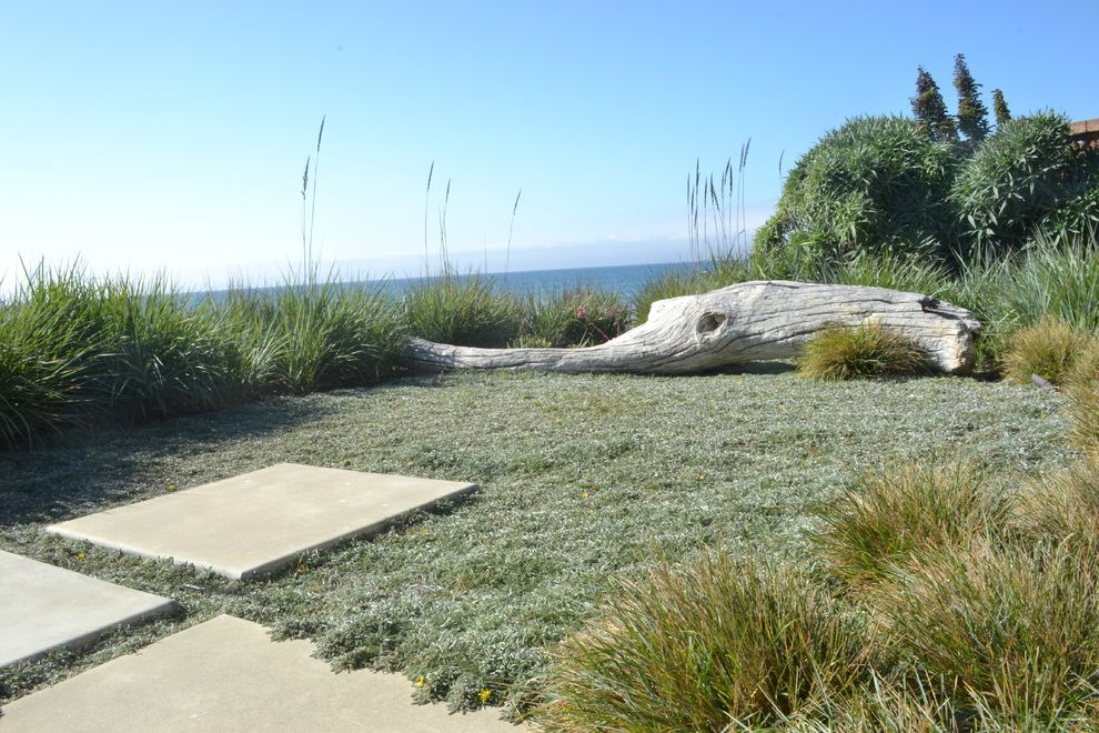 Drought Resistant Ground Cover   Beach Style Landscape Also Beach Coastal Concrete Driftwood Lawn Alternate Ocean Ocean View Ornamental Grasses Stepping Stones Stone Tall Grass Water View