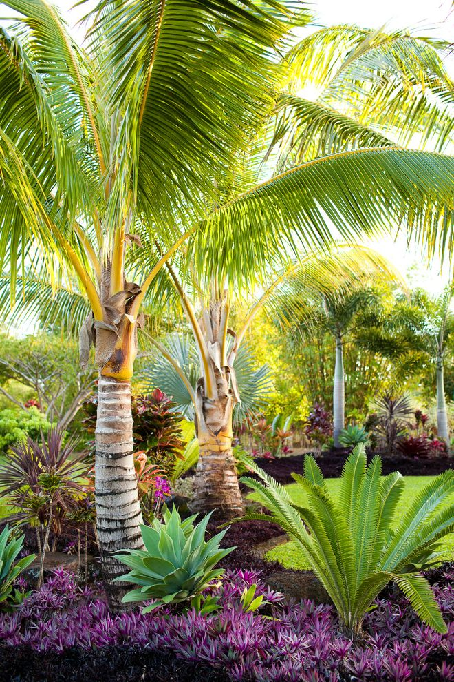 Drought Resistant Ground Cover   Tropical Landscape Also Bushes Coconut Palm Grass Ground Cover Lawn Palm Tree Purple Flowers Purple Shrubs Shrubs