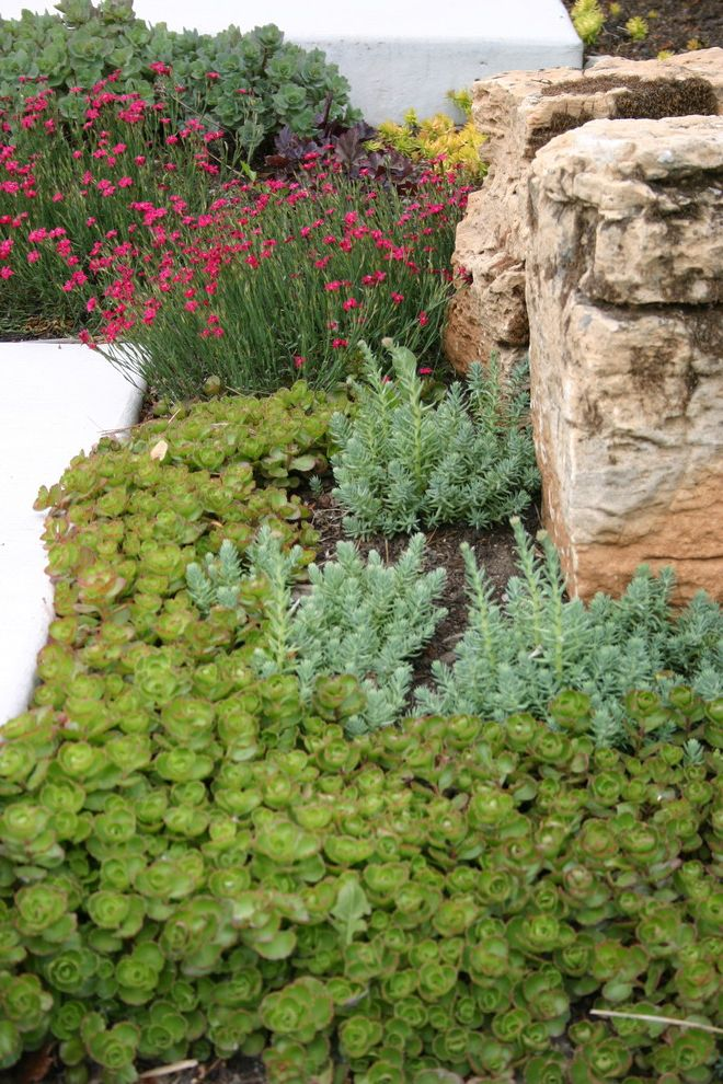 Drought Resistant Ground Cover with Contemporary Landscape  and Border Plantings Concrete Paving Pink Flowers Rock Wall Sedums Succulents