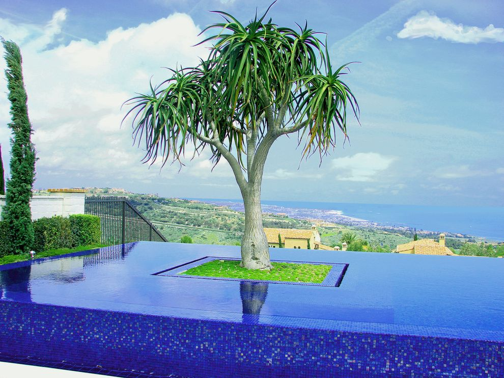 Paradise Tree Service   Mediterranean Pool  and Blue Coast Cypress Disappearing Edge Pool Geometric Geometry Glass Tile Infinity Pool Minimal Modern Planter Tile View Zero Edge Pool