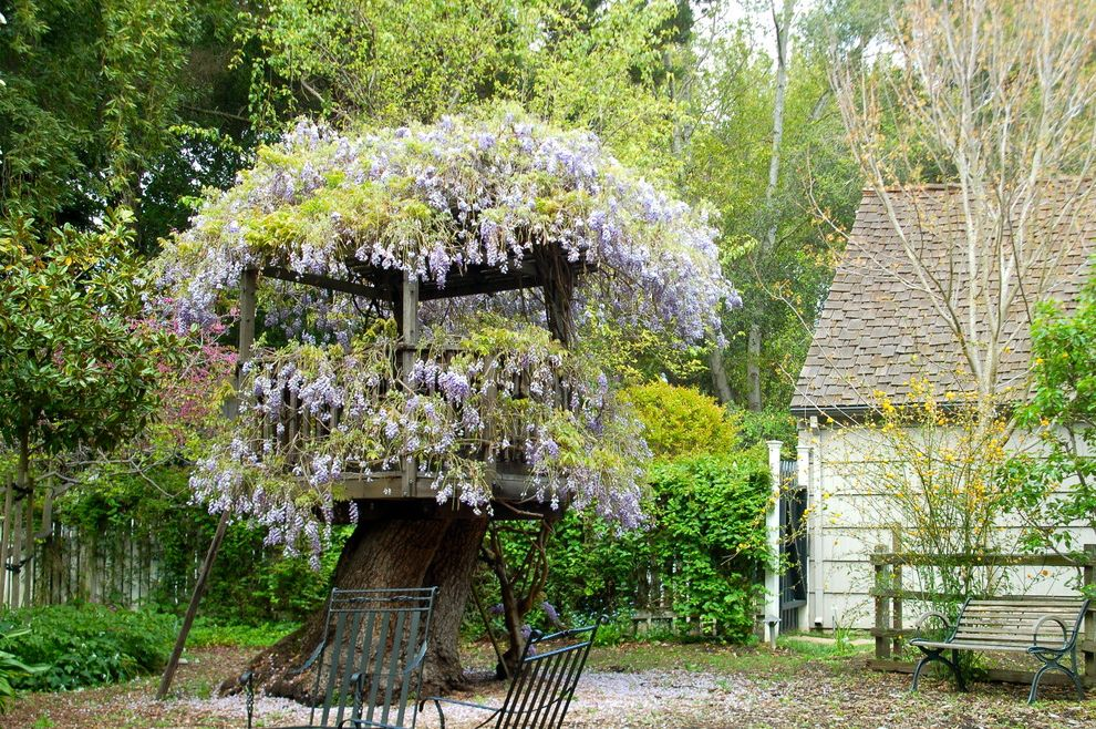 Wisteria On Atherton Fort $style In $location