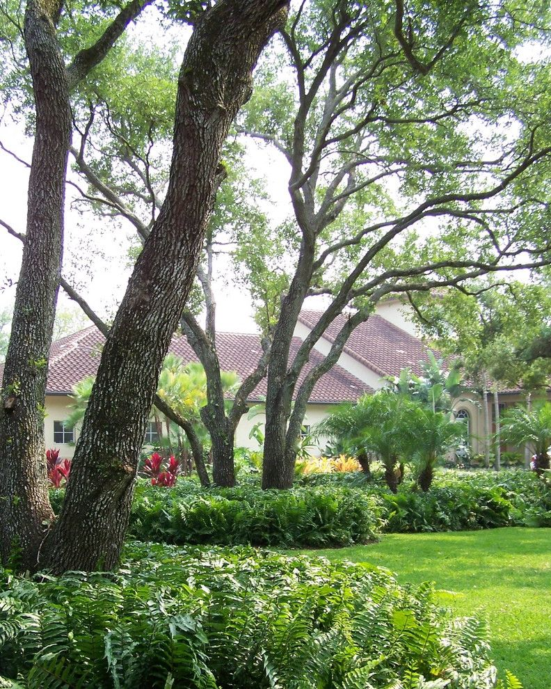 Rainbow Tree Care   Tropical Landscape  and Fern Front Yard Grass Lawn Overgrown Palm Tree Planting Tile Roof Tree Turf