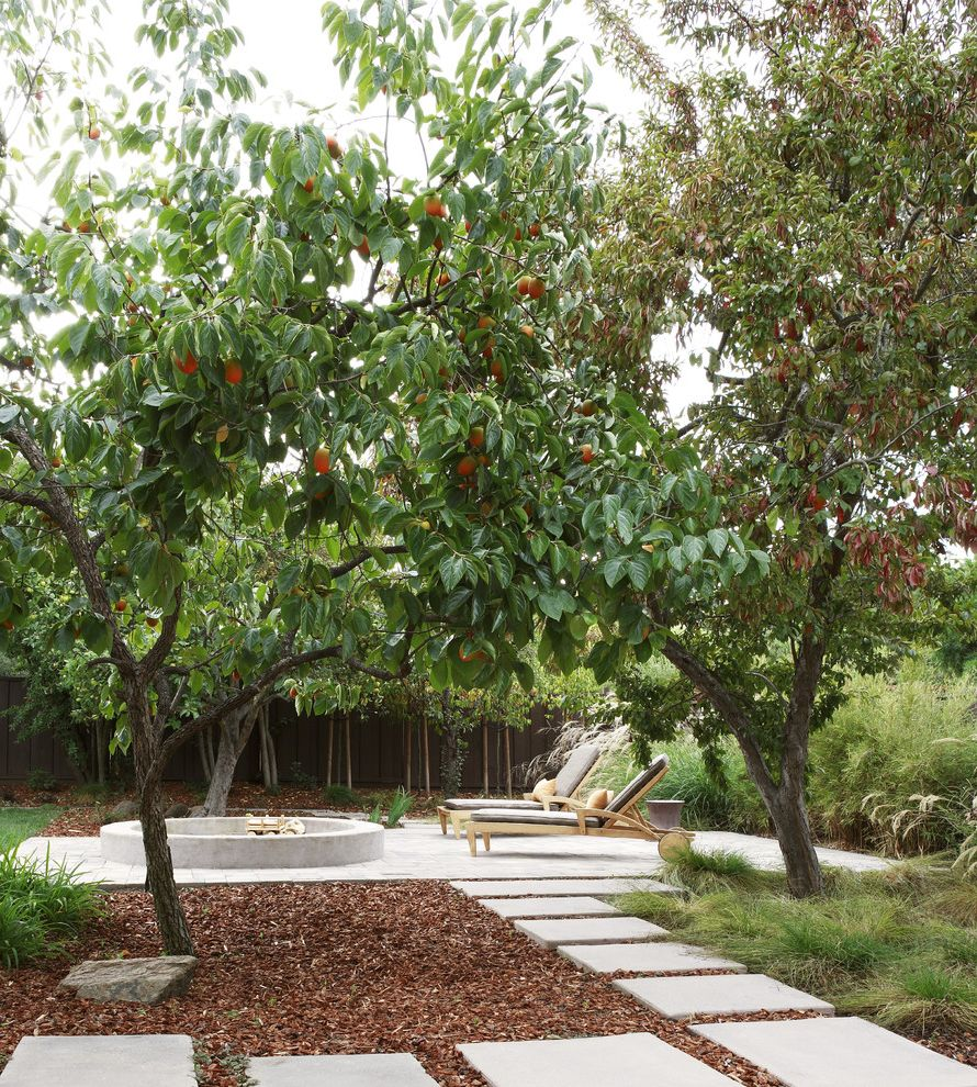 Rainbow Tree Care with Contemporary Patio Also Concrete Patio Fruit Tree Landscape Mulch Orange Tree Outdoor Chaise Lounge Stone Pathway Stone Pavers Stone Walkway