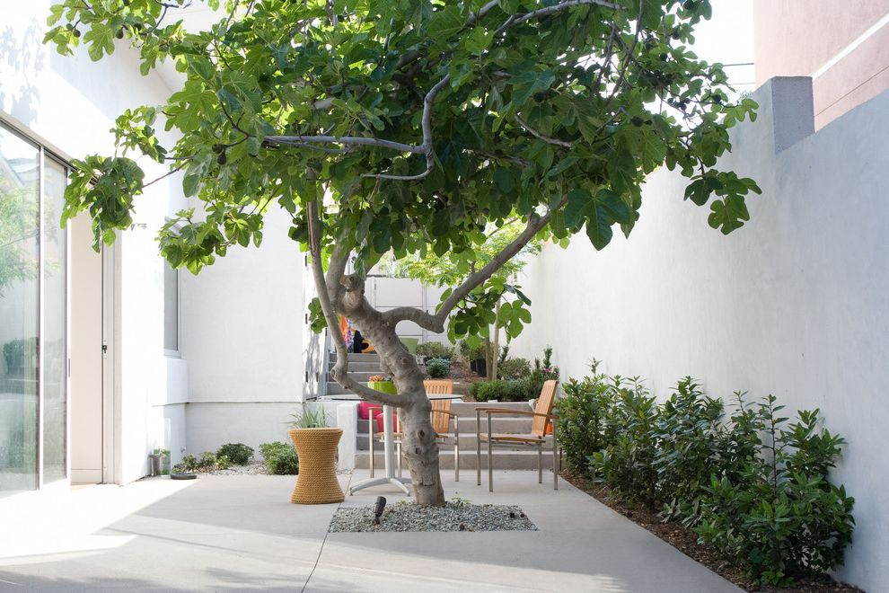 Rainbow Tree Care with Contemporary Patio  and Garden Stool Glass Sliding Doors Gravel Hardscape Outdoor Living Outdoor Seating Shrubs Steps Tree in Patio White Walls